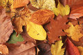 Autumn Leafs Stock Images - 25485384
