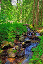 Brook In The Forest Royalty Free Stock Images - 2552479