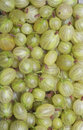 Green Gooseberries Royalty Free Stock Photography - 25518207