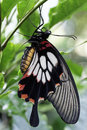 Beautiful Butterfly Royalty Free Stock Images - 25518719