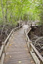 Boardwalk In Mangrove Forest Stock Images - 25526084