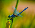 Summer Dragonfly Stock Photos - 25568093