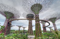 Gardens By The Bay, Singapore Stock Photo - 25593530