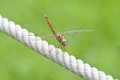 Dragonfly Royalty Free Stock Photography - 25613837