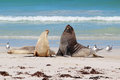 Sea Lions Royalty Free Stock Photography - 25613997