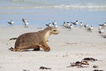 Sea Lion Stock Image - 25614651