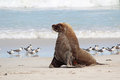 Sea Lion Royalty Free Stock Image - 25614686