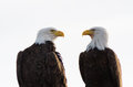 A Pair Of Bald Eagles Facing Each Other Royalty Free Stock Images - 25634159