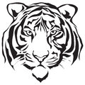 Face Tiger Royalty Free Stock Images - 25639459