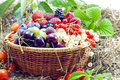 Berries And Fruits Assortment Royalty Free Stock Photo - 25661965