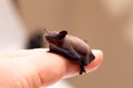 Baby Bat Sitting On Finger Stock Photos - 25665523