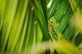 Tropical Lizard Royalty Free Stock Photography - 25673077