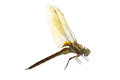 Dragonfly Royalty Free Stock Photos - 25673458