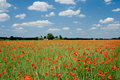 Poppy Royalty Free Stock Images - 2575129