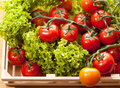 Tomatoes And Salad In Wooden Basket Stock Photo - 25709160