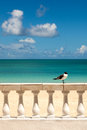 Sunny Tropical Seashore With Gull Sitting On Fence Royalty Free Stock Photography - 25724437