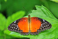 Red Butterfly Stock Photos - 25742173