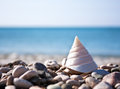 Sea Shell With Sea And Blue Sky Royalty Free Stock Images - 25745139