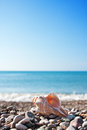 Sea Shell With Sea And Blue Sky Royalty Free Stock Photo - 25745165