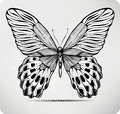 Butterfly, Hand-drawing. Vector Illustration. Royalty Free Stock Photography - 25750997