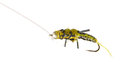 Fly Fishing Lure Wasp Stock Photo - 25767790