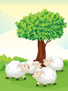 Sheeps Under Tree Royalty Free Stock Image - 25770806