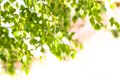 Green Leaves Stock Images - 25773954