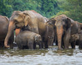 Elephant Family In Water Royalty Free Stock Image - 25782206