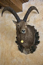 Hunting Trophy Stock Photography - 25790682