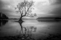 Lone Tree In A Lake Royalty Free Stock Photo - 25795935