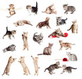 Funny British Kittens Collection Stock Photography - 25802472