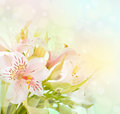 Beautiful Flower Is  In The Rays Of Light Stock Photos - 25817703