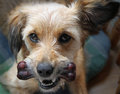 Dog With A Bone Stock Images - 25817874