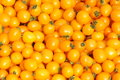 Tomatoes Stock Image - 25822321