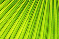 Green Leaf Background Stock Photo - 25838060