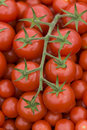 Tomato On The Vine Royalty Free Stock Photography - 25847077