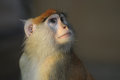 Close Up Photo Of Monkey In Zoo Stock Image - 25861391