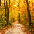 Pathway In The Autumn Forest Stock Photography - 25866382