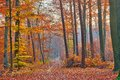 Pathway In The Autumn Forest Royalty Free Stock Images - 25866479