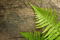 Fresh Fern Border Stock Photo - 25868780