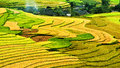 Rice Field On Terraced In Mountain. Royalty Free Stock Image - 25869636