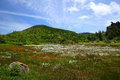 Cotton Grass And Mountain Stock Images - 25883234