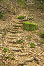 Stairs In The Forest Royalty Free Stock Photography - 2591937