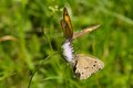Two Butterflies Royalty Free Stock Images - 25912639