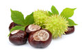 Chestnut With Leafs Stock Images - 25927594