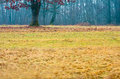 Grass In An Autumn Forest Royalty Free Stock Photos - 25931068