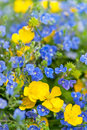 Bouquet Of Wildflowers Royalty Free Stock Images - 25934049