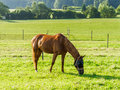 Horse Grazing In Field Stock Photography - 25935412