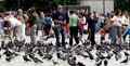 Feeding Pigeons In London Stock Photography - 25938962