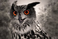Great Horned Owl Royalty Free Stock Images - 25947419
